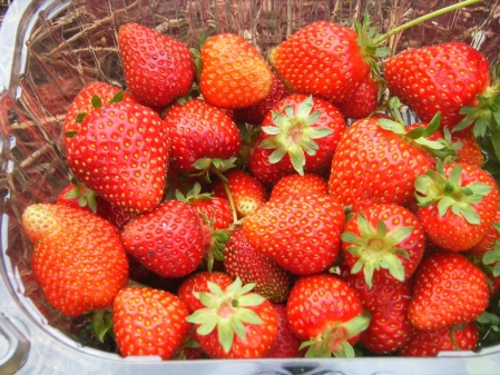 strawberry-punnet